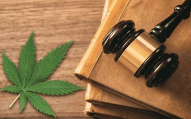 L'étau juridique enfin allégé par La Cour de cassation sur la vente de CBD en France